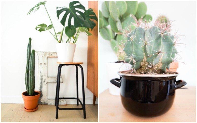 cactussen10