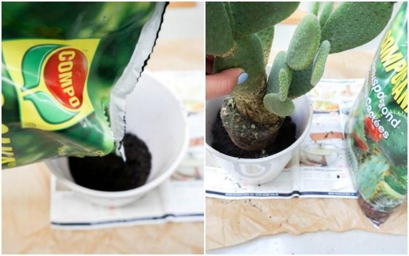 cactussen3
