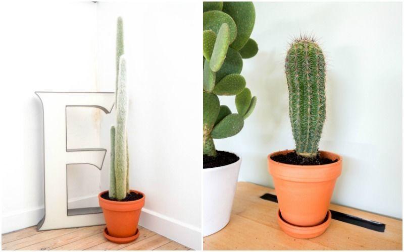 cactussen5