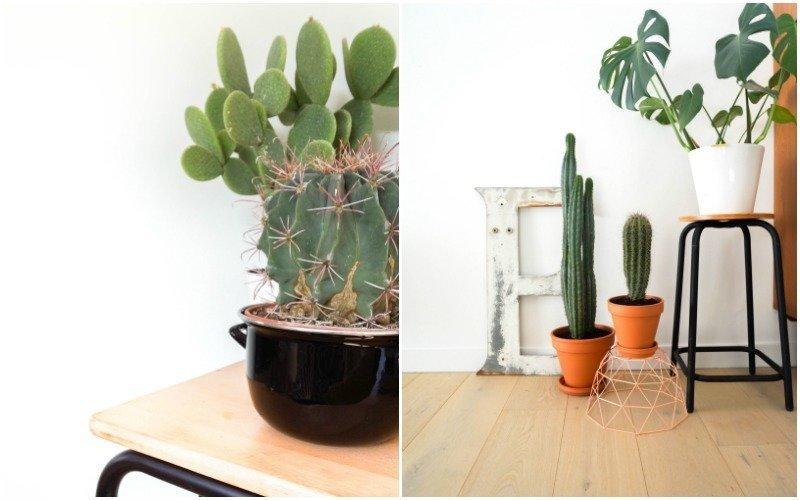 cactussen6