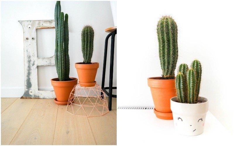 cactussen9